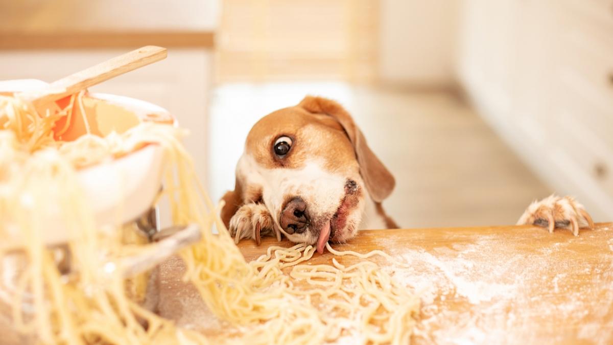Hund mit Pasta