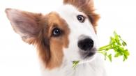 Mythen über die Hundeernährung