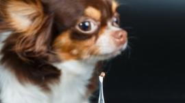 Hunde mit Zecke