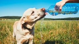 hundmitwasserflasche.jpg